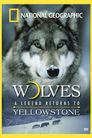 National Geographic - Wolves, A Legend Returns to Yellowstone