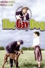 The Gay Dog