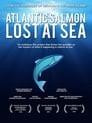 Atlantic Salmon: Lost at Sea