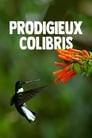 Hummingbirds: Magic in the Air